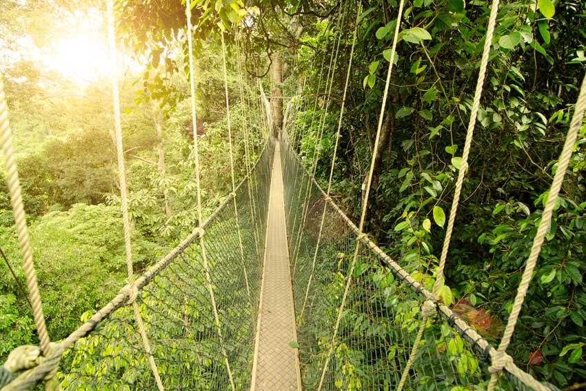 Taman Negara Canopy tour - AllinMam.com