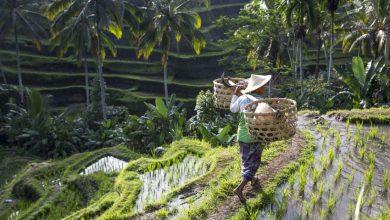 Photo of Bali met kinderen; zó veel te doen en te zien!
