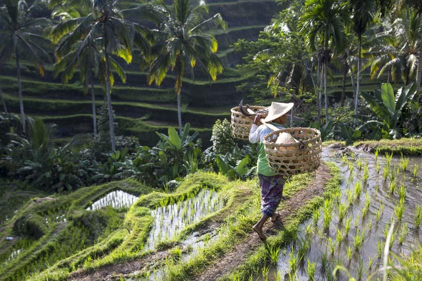 Bali met kinderen - AllinMam.com