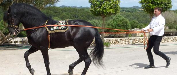 Menorca paarden