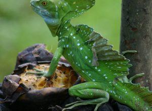Photo of Costa Rica | Eén grote dierentuin voor kinderen