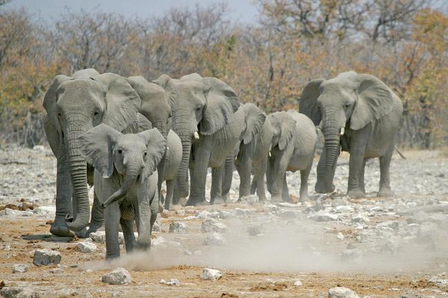 Reis naar Afrika