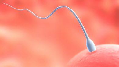 2 weken zwanger - jouw zwangerschap van week tot week - AllinMam.com