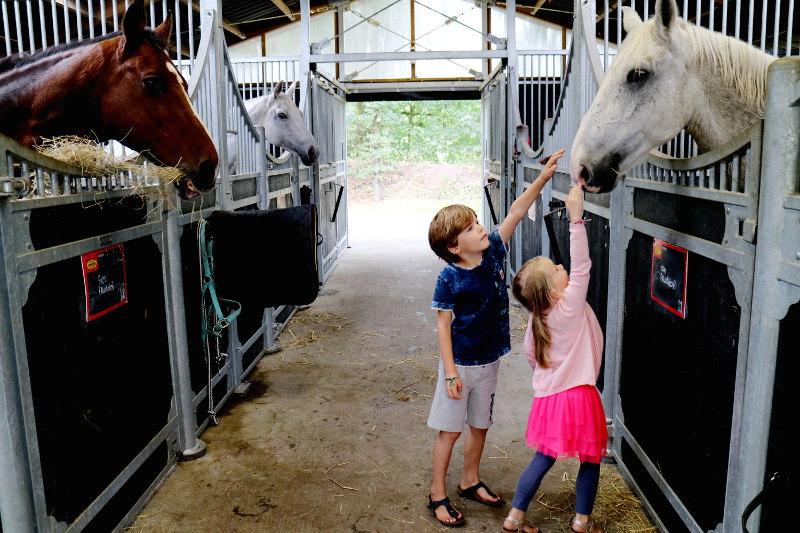 paardenhotel de cantharel van der valk apeldoorn - AllinMam.com
