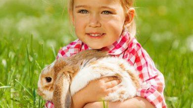 Een huisdier; wordt het een hamster, een cavia of een konijn? - AllinMam.com