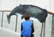 Natuurhistorisch museum Rotterdam - AllinMam.com