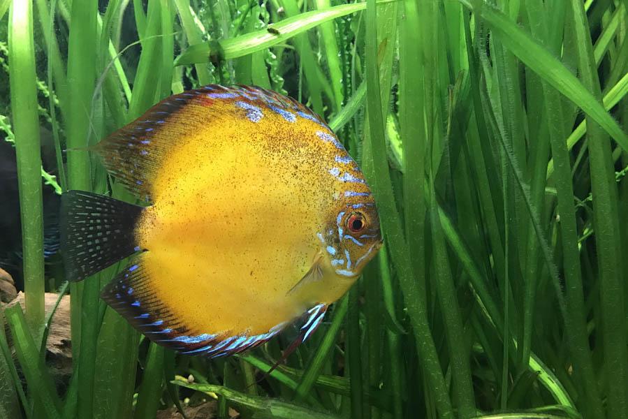 Vissen in het Aquarium van Pairi Daiza - AllinMam.com
