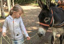 Wandelen met een ezel in Noord-Limburg - AllinMam.com