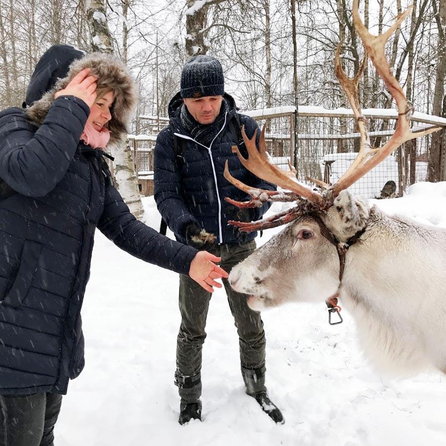 Rendieren voeren in Finland - AllinMam.com