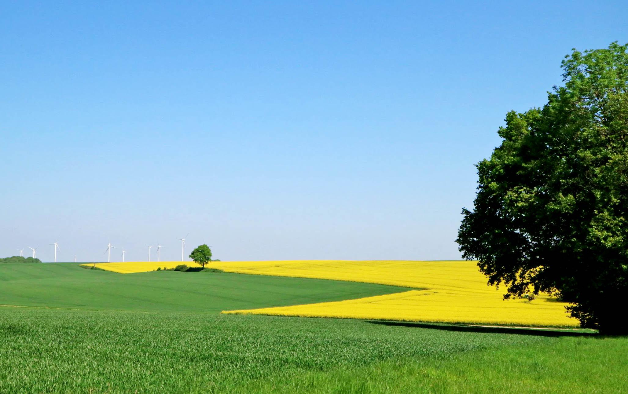 Velden met koolzaadbloemen in Noord-Frankrijk - AllinMam.com