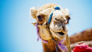 Tips voor een vakantie naar Egypte - AllinMam.com
