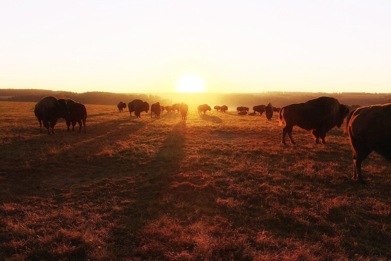 Slapen tussen de bisons op Le Ranch des Bisons - AllinMam.com