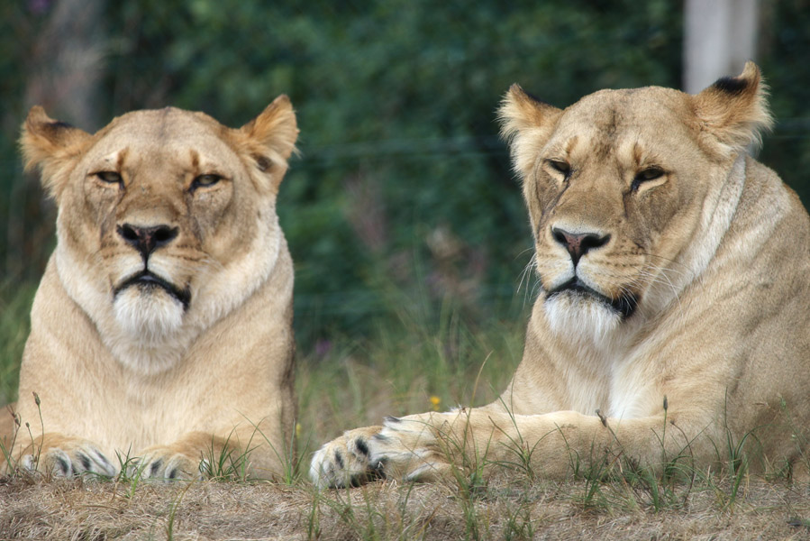 Givskud Zoo en dinopark in Deens Jutland - AllinMam.com