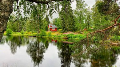 Photo of Gezinsvakantie in Zweden: Wat te doen in Värmland?