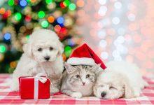 Photo of Adventskalender voor hond, kat of knaagdier