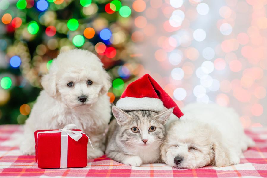 Adventskalender voor hond, kat of knaagdier - AllinMam.com