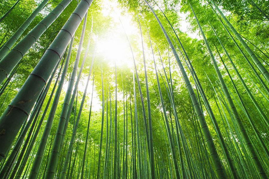 6 voordelen van bamboe kleding op een rijtje - AllinMam.com