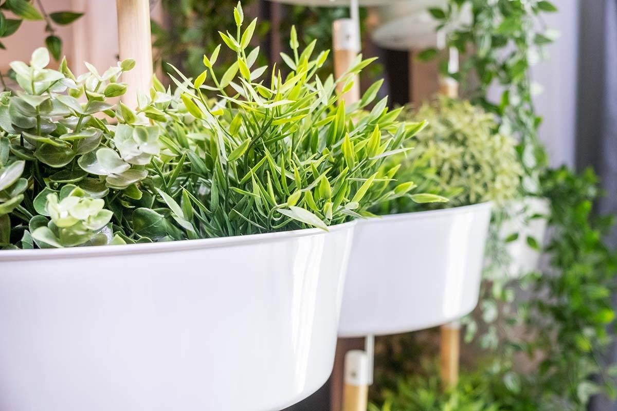 Kunstplanten, voordelen en onderhoudstips - AllinMam.com