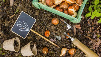 Bloembollen planten kan overal! - AllinMam.com